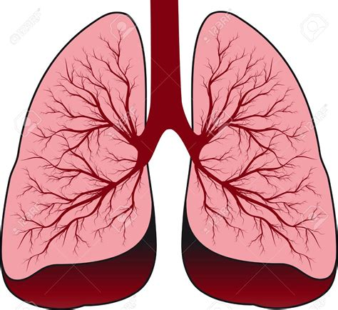 Lungs Clipart Lung Clipart Clipground