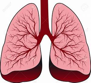 Lung clipart - Clipground