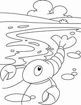 Lobster Coloring Kraby Raki Printable Kolorowanki Tiere Bestcoloringpages Andere Vorlagen Zurueck sketch template