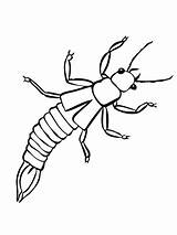 Insect Earwig Coloring Stick Pages Template Silverfish Walking Printable sketch template