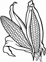 Corn Coloring Vegetables Pages Vegetable Garden Colour Templates Fruits Books Printable Printables Veggies Recommended Template Mycoloring sketch template