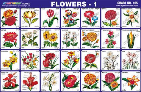 Indian Flowers Pictures With Names In Marathi  Bedwallsco