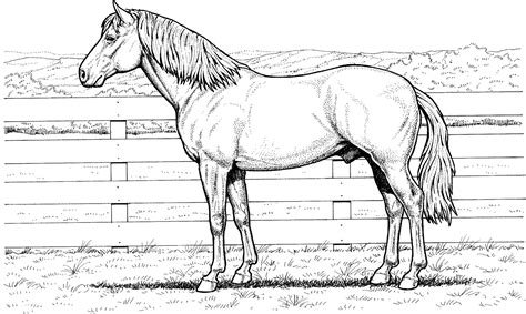 Realistic Coloring Pages Of Horses Realistic Coloring Pages