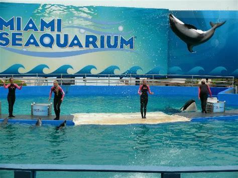 miami sea world aquarium seaquarium picture of miami seaquarium key biscayne tripadvisor