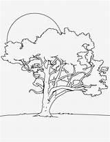 Tree Oak Coloring Night Trees Drawing Banana Outline Angel Printable Drawings Bare Getcolorings Colorluna Getdrawings Leaf Rry Luna sketch template