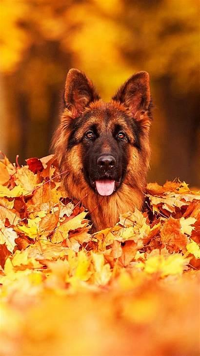 German Shepherd Aesthetic Dog Moodboard Base Adopts