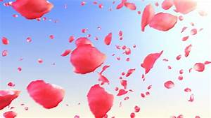 Flying Rose Petals In The Sky With Sun. HD 1080. Looped ...