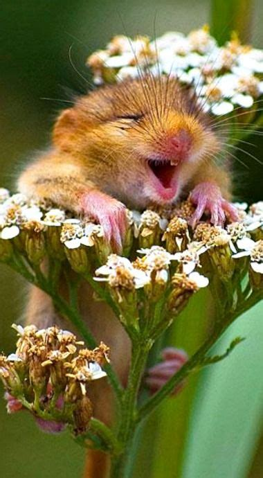laughing mouse smiling animals cute animals animals