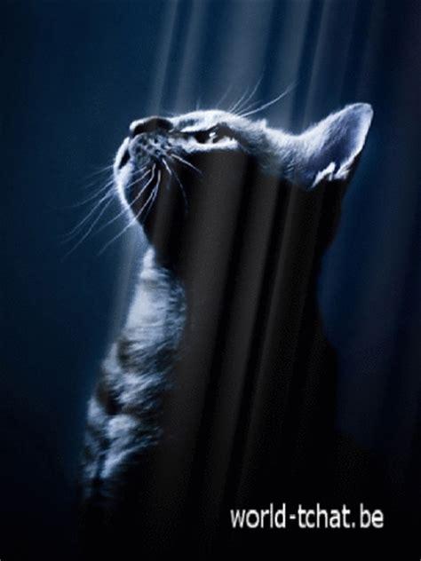 chat lumieres fond 233 cran anim 233 gratuit pour mobile