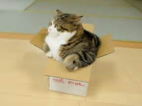 cat in a box magnificent maru the cat that enters every size box