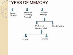 Biological basis of memory