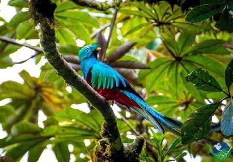 monteverde rica costa cloud forest national quetzal park reserves reserve parks explore visit vacationstocostarica info