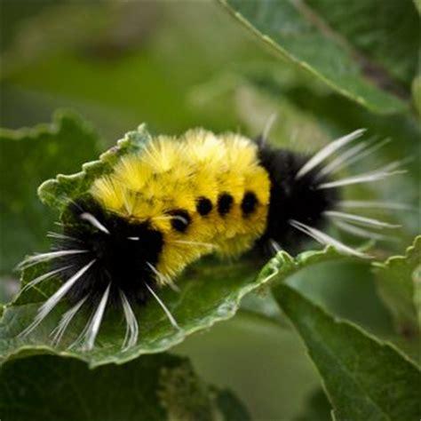 km designs perpetual change fuzzy caterpillar black
