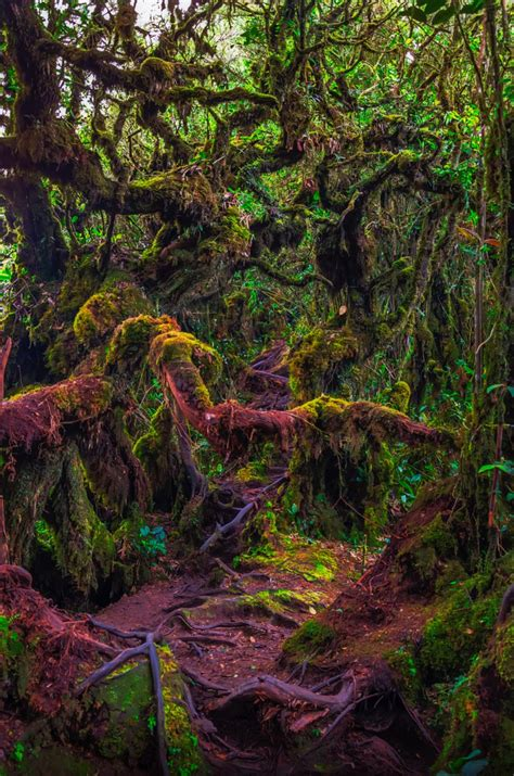 Mossy Forest This Mossy Forest Is Located At Cameron