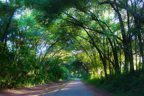 canap tress canopy trees by alliecat33 on deviantart