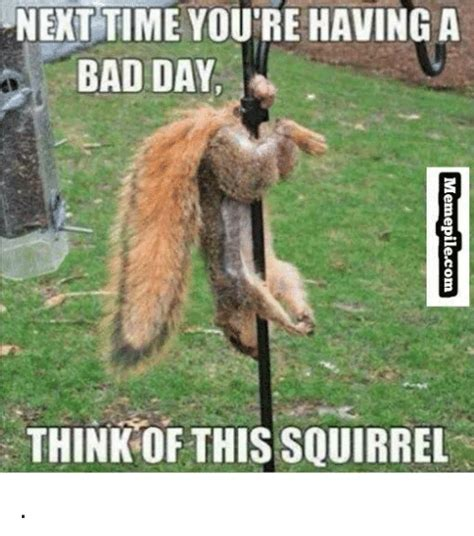 Bad Day Meme - next time you re having a bad day think this squirrel bad day meme on me me