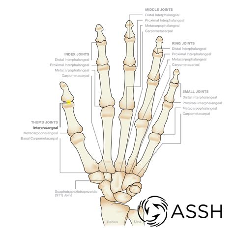 Anatomy Finger Joints The Handcare Blog