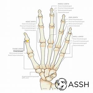 Anatomy 101  Finger Joints