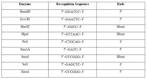 worksheets restriction enzyme worksheet opossumsoft