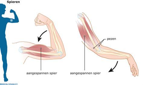 Vermoeidheid spieren