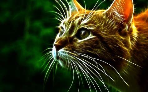 3d Cat Wallpaper Wallpapersafari