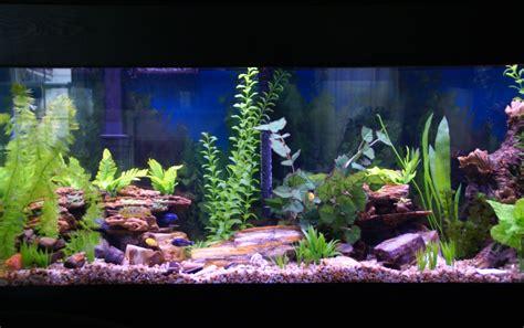 Aquascaping Cichlid Aquarium by Cichlids Petrified Aquascape