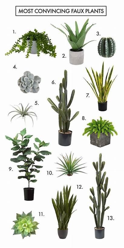 Plants Faux Fake Convincing Most Azzhealthy Plant