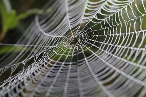 Giant Spider Webs Appear In Dallas Suburb Of Rowlett. Decorative Post Bases. Easter Bunny Decor. Red Living Room Chairs. Hgtv Home Decorating. Decorative Napkins Paper. Unique Chairs For Living Room. Laser Lights For Christmas Decorations. 3 Piece Wall Decor