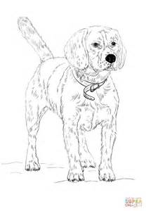 beagle coloring page  printable coloring pages