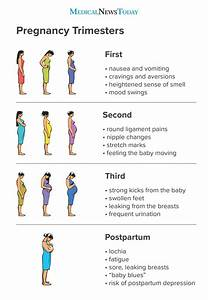 Pregnancy Trimesters  Everything You Need To Know