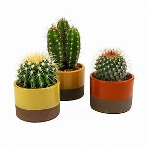 3.5 in Assorted Cactus Plant in Horizon Deco Pot (3-Pack ...
