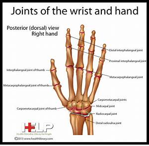 Wrist Joint Anatomy Ppt D On Hand Wrist And Elbow Doctors ...