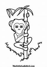 Coloring Monkey Climbing Bamboo Pages Tree Rock Climb Printable Animals Getcolorings Panda Print Chimpanzee Getdrawings Categories sketch template