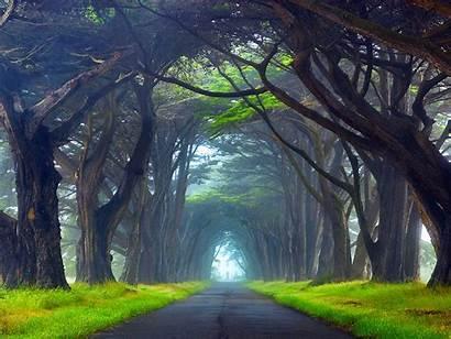 Nature Desktop Trees Tunnel Ireland Way Resolution