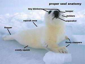 24 Best Images About Totally Unscientific Animal