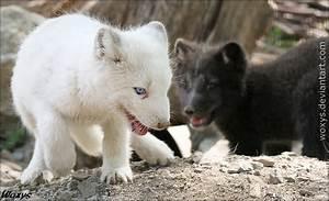 Baby arctic foxes | Beautiful Things / Cosas Bellas ...