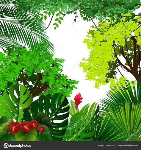 foto de Ilustração Vetor Fundo Floresta Tropical Com Palmeiras