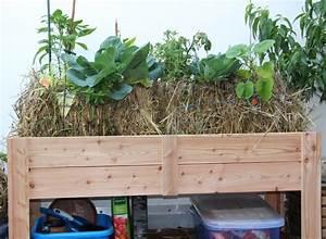 Gurken Im Hochbeet : hochbeet mit stroh pflanzen auf stroh ~ Orissabook.com Haus und Dekorationen