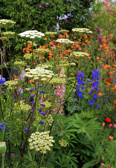 1000 images about cottage garden plant list on
