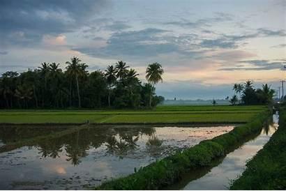 Sawah Indonesia Pertanian 4k Pemerintah Upaya Mendukung