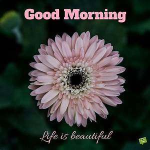 Good Morning Life Is Beautiful Quote Pictures, Photos, and Images for Facebook, Tumblr ...