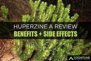 Huperzine A Review  Benefits  Side Effects  U0026 Dosage Guide