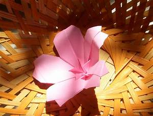 Origami  Origami Cherry Blossom