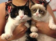 Pokey and Grumpy Cat