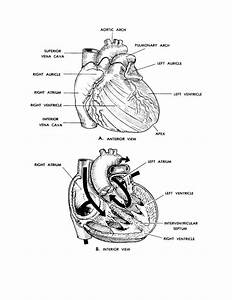 50 Anatomy And Physiology Coloring Pages Free  Anatomy And Physiology Coloring Pages Free Az
