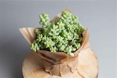 Plants Indoor Plant Getty