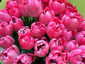 Was Sind Frühlingsblumen : fr hlingsblumen bersicht blumen rosen ~ Whattoseeinmadrid.com Haus und Dekorationen