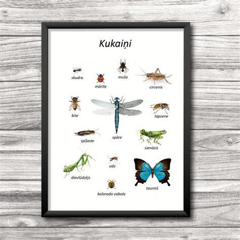 Kukaiņu plakāts - Mācību materiāli