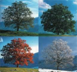 Same Tree Different Seasons