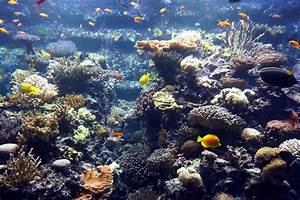 Fische Aquarium Hamburg : hamburg tropen aquarium hagenbeck ~ Lizthompson.info Haus und Dekorationen
